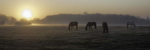 enfrance igny sunset brume matinale atmosphère soleil sunrise chevaux