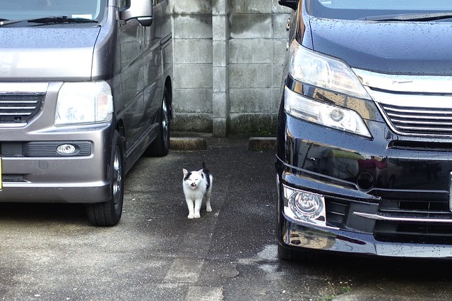 Today's Cat@2019-04-15