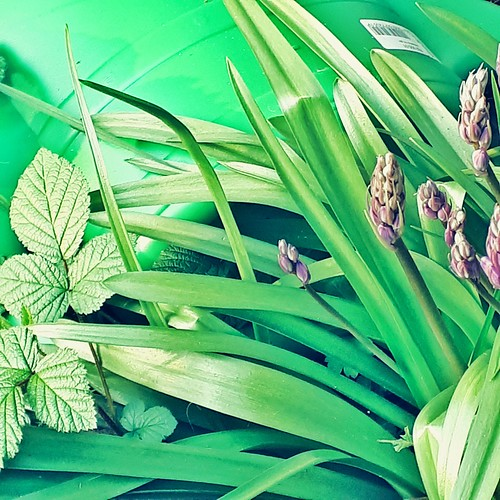 shades of green | by dells pics