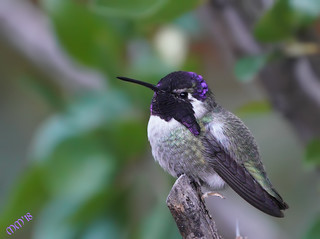 Surprised AZ and NM have Hummingbirds year around | by MedicineMan4040