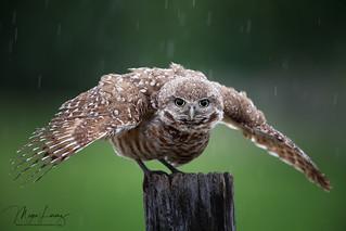 Rain Dance | by Megan Lorenz