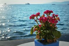 A vase of kalanchoes in Mykonos. For my dear Friend Irene