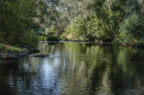 #13/52 King River, Edi cutting
