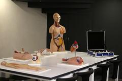 Prof. Dr. Nurettin Ali BERKOL Anatomi Maket Laboratuvarı 9