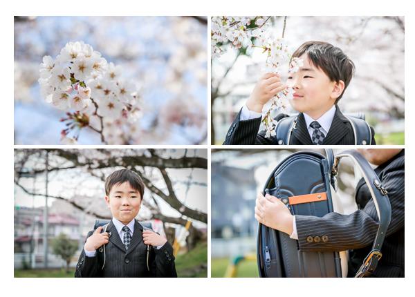 満開の桜 ソメイヨシノ スーツを着た男の子 ランドセル
