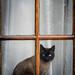 Moggy in a Window by Paul Kaye