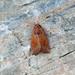 <p><a href=&quot;http://www.flickr.com/people/nvoaden/&quot;>Terathopius</a> posted a photo:</p>&#xA;&#xA;<p><a href=&quot;http://www.flickr.com/photos/nvoaden/47581385652/&quot; title=&quot;Large Ear, Roudsea, Cumbria, England&quot;><img src=&quot;https://live.staticflickr.com/65535/47581385652_4f5d7b428b_m.jpg&quot; width=&quot;240&quot; height=&quot;160&quot; alt=&quot;Large Ear, Roudsea, Cumbria, England&quot; /></a></p>&#xA;&#xA;