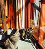 Cats #findingthesunnyspot #catsofinstagram