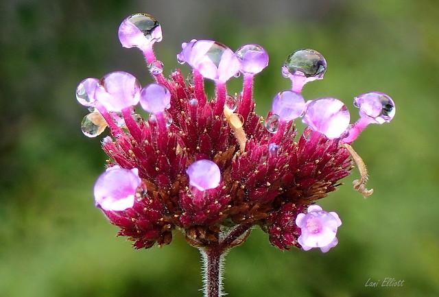 Delicate Garden Droplets