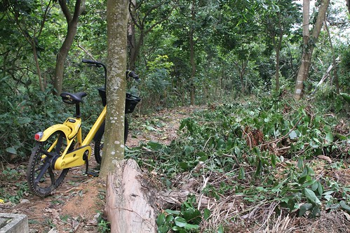 Dumped ofo bike in the bushes outside the Tsz Shan Monastery