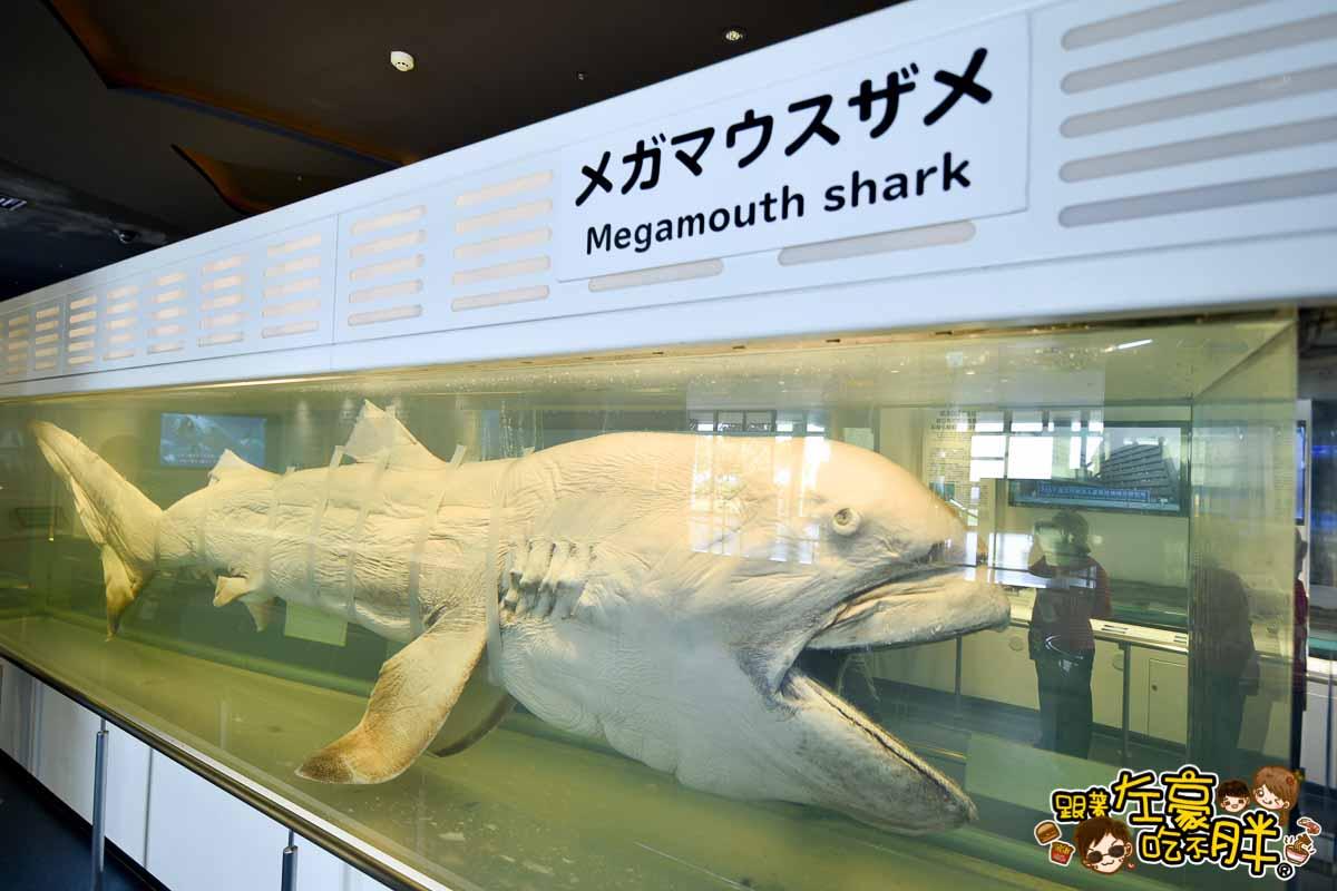 沖繩美麗海水族館-116