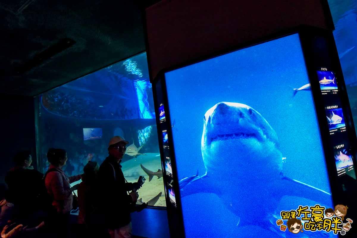 沖繩美麗海水族館-100