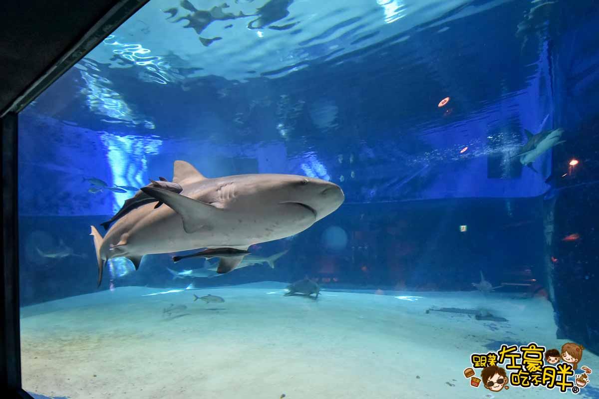 沖繩美麗海水族館-95