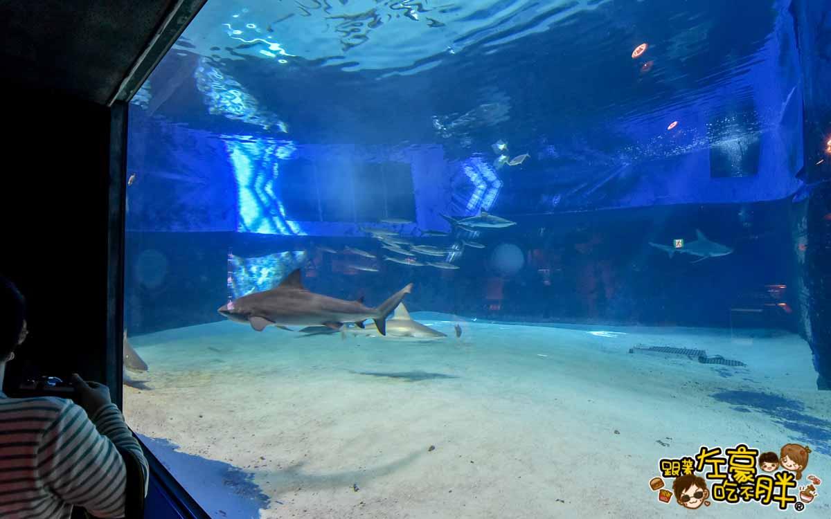 沖繩美麗海水族館-94