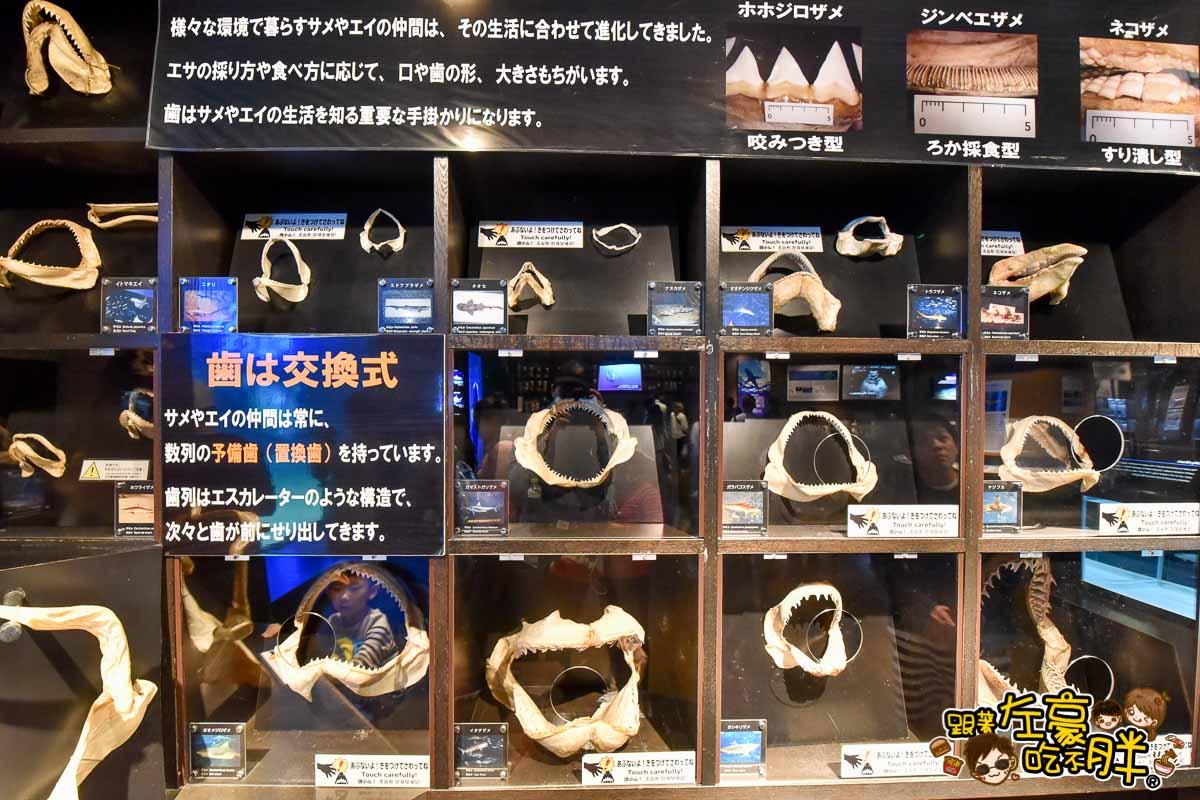 沖繩美麗海水族館-93