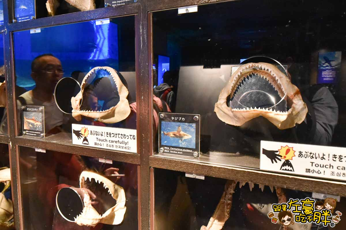 沖繩美麗海水族館-91