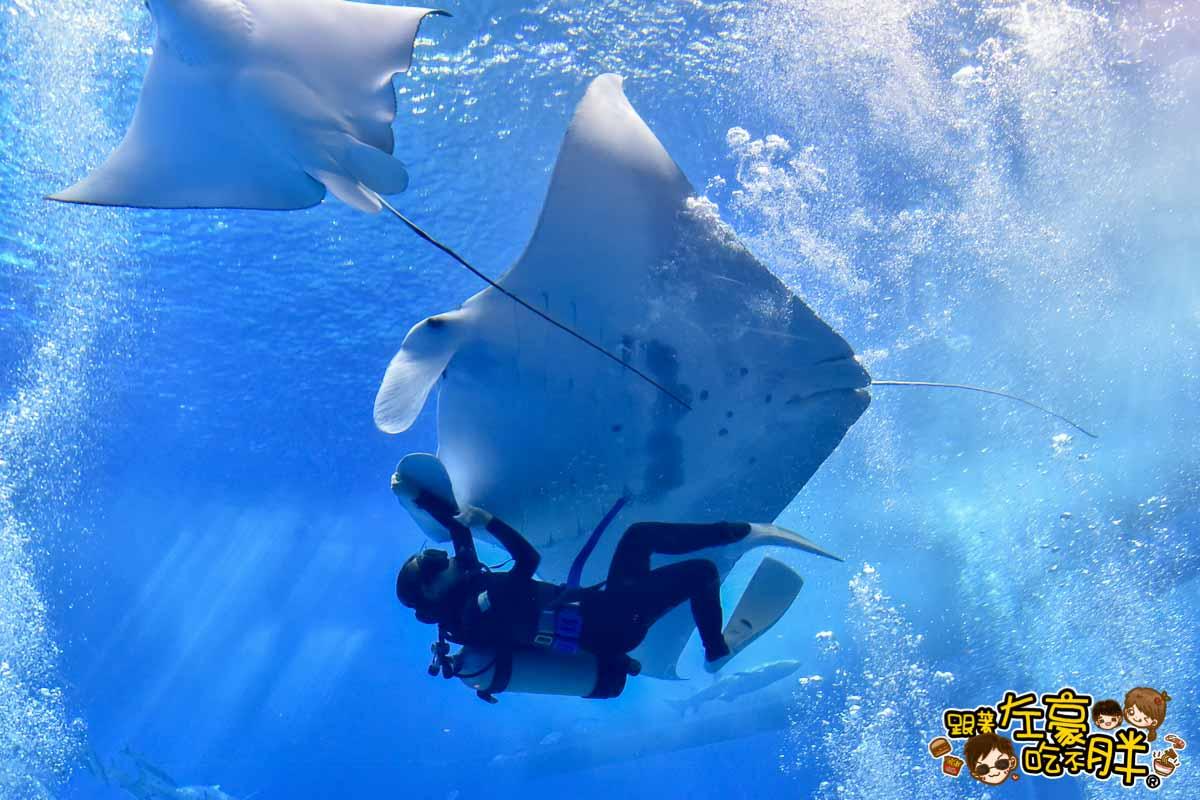 沖繩美麗海水族館-86