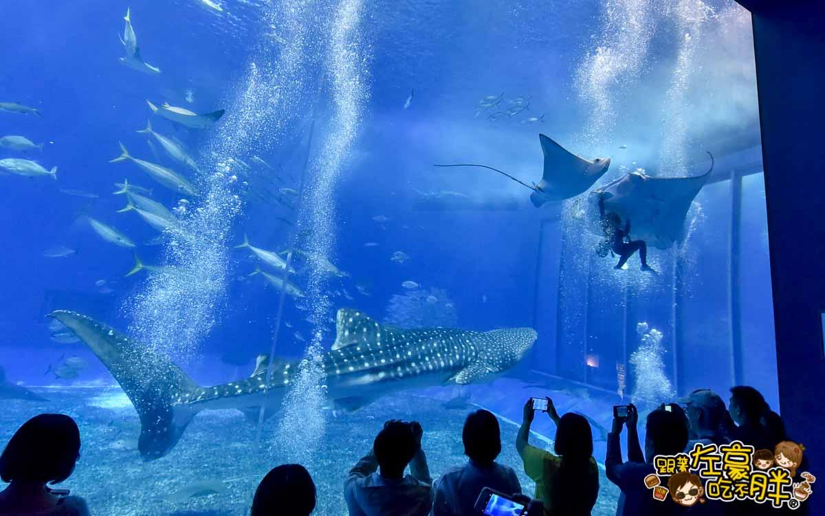 沖繩美麗海水族館-85