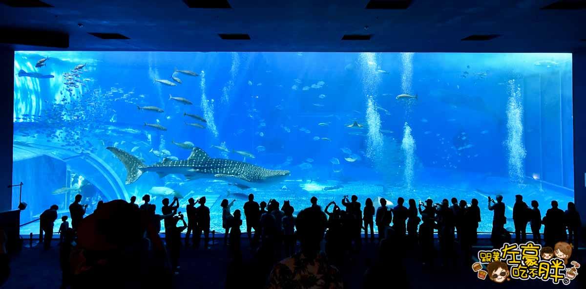 沖繩美麗海水族館-84