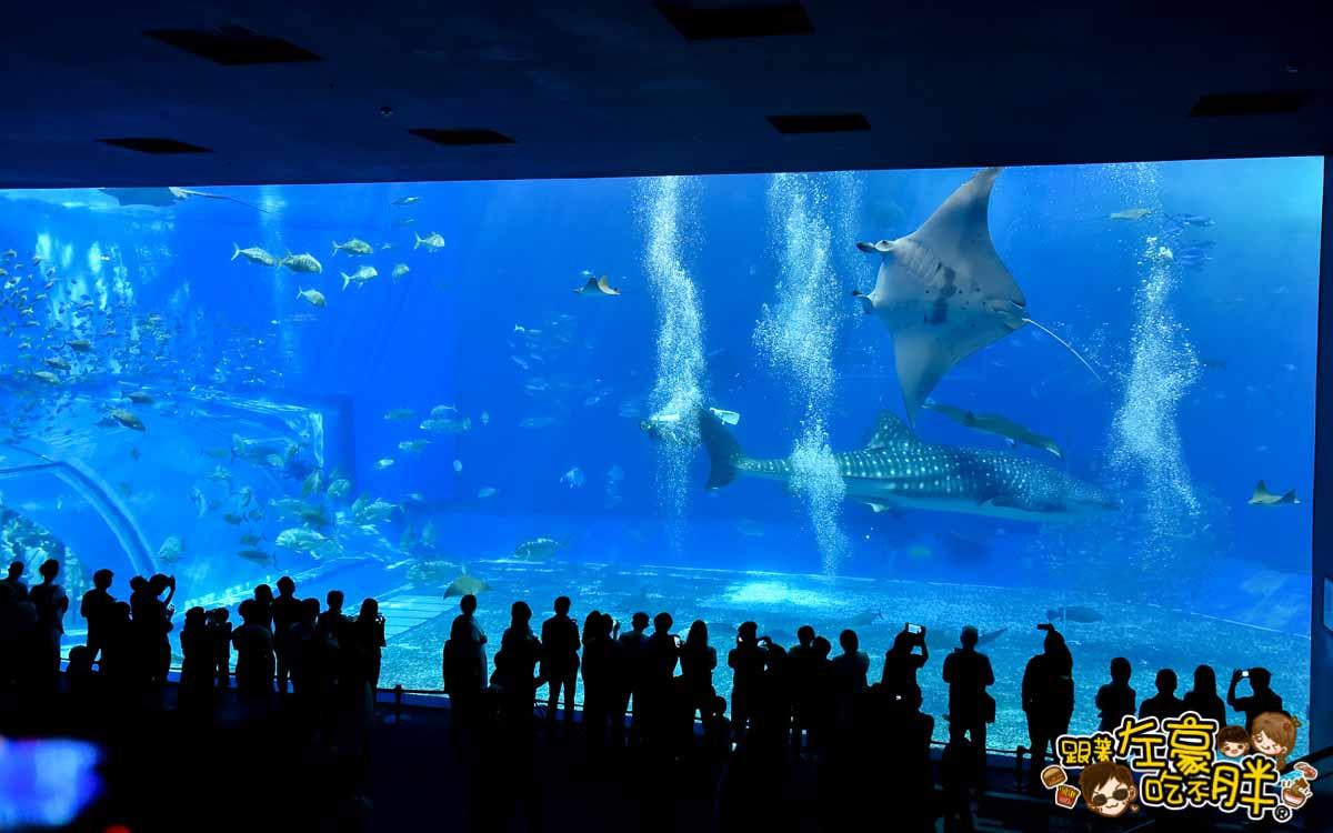 沖繩美麗海水族館-81