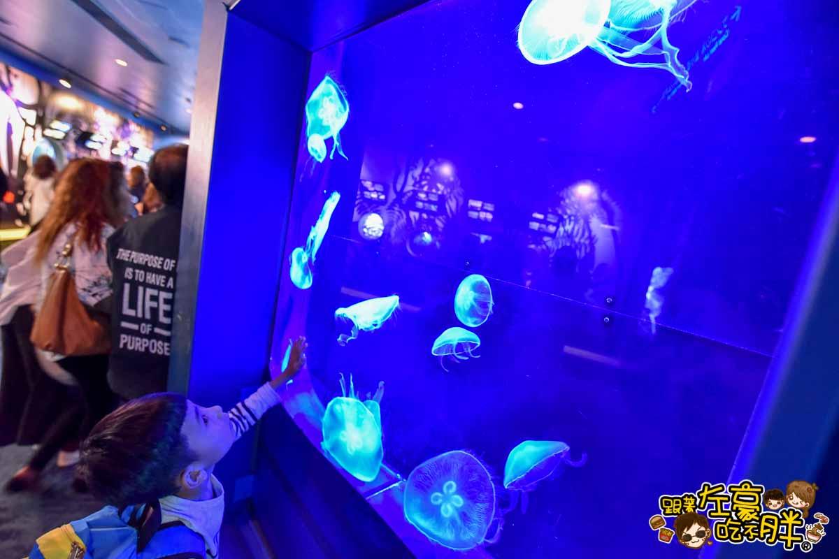 沖繩美麗海水族館-78