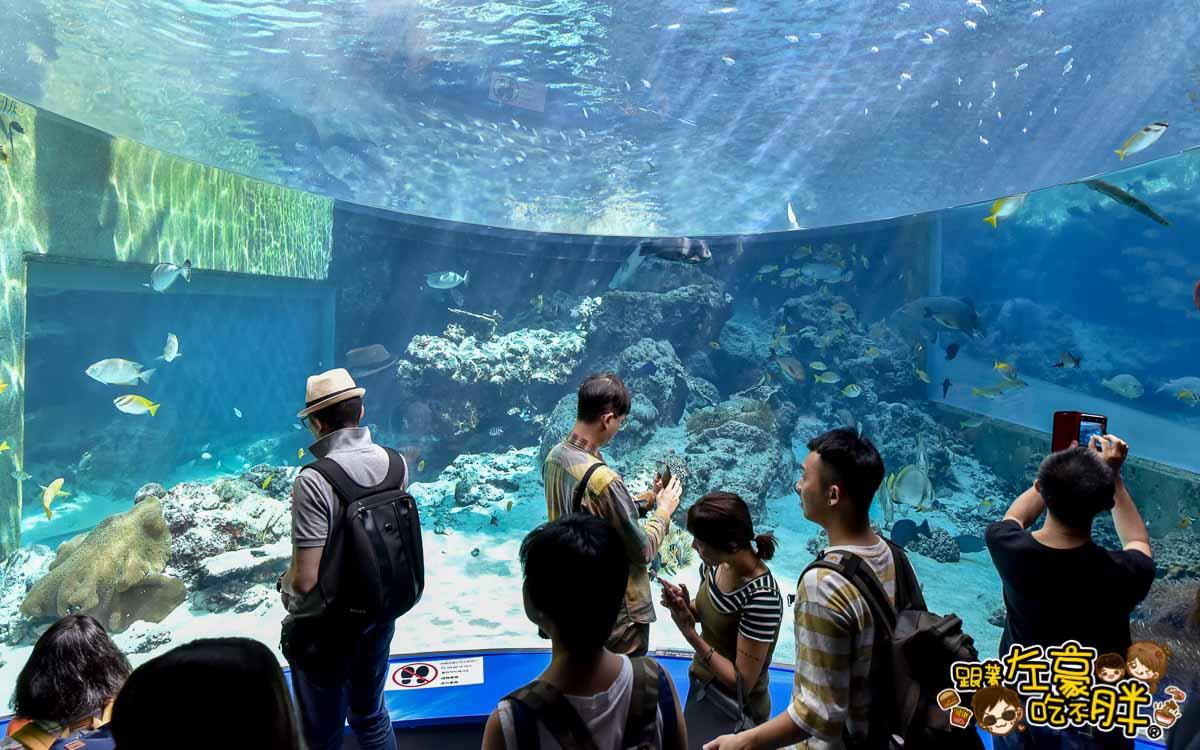 沖繩美麗海水族館-74