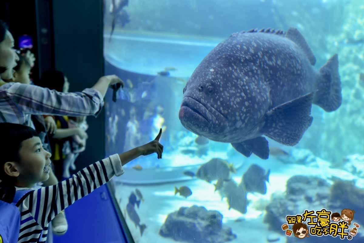 沖繩美麗海水族館-72
