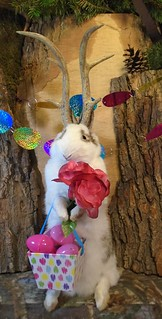 May the Great Easter Jackalope bring you baskets full of Easter joy!