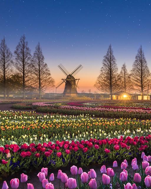 Dawn Of Spring