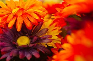 fake flowers | by pepperberryfarm
