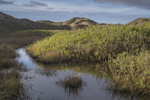 Pond in the Dunes   by northcoastgreg