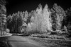 The_Dark_Side_Of_Infrared.jpg by NoBudgetPhoto.de