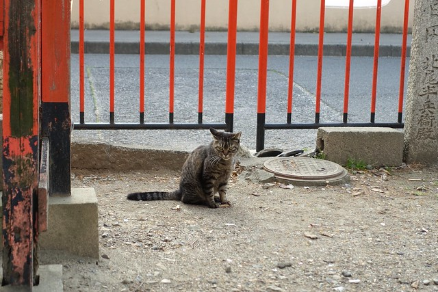 Today's Cat@2019-04-19