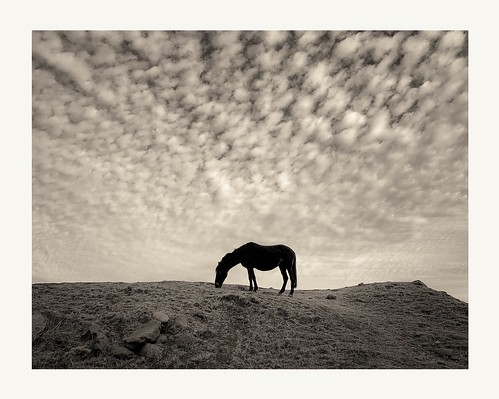 Horse&Clouds | by MGuarini