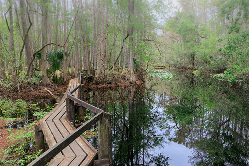 highlandhammockstatepark sebring florida unitedstatesofamerica wetland wetlands swamp swamps marsh marshes boardwalks stateparks floridastateparks