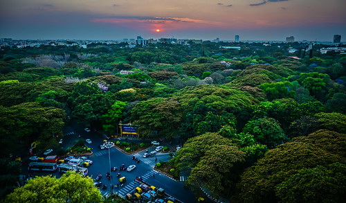 bangalore karnataka india sunset over cubbon park viewed from jw marriott hotel bengaluru indian parc jarden jardens tree tops aerial view sun