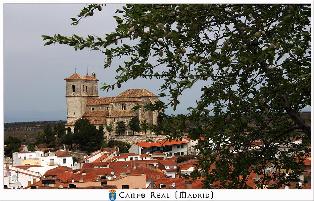 Almendro, tejados e iglesia de Campo Real de Madrid