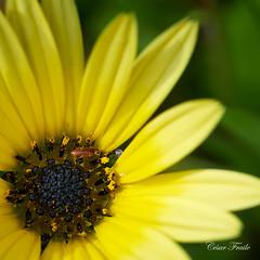 Bicho y flor