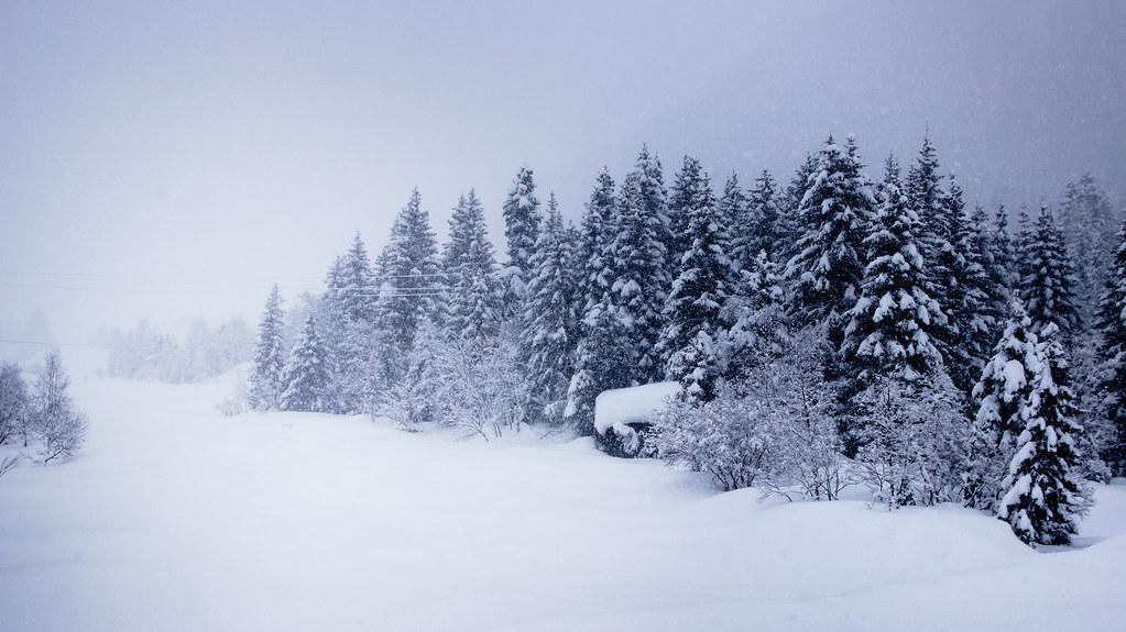Schneefrost