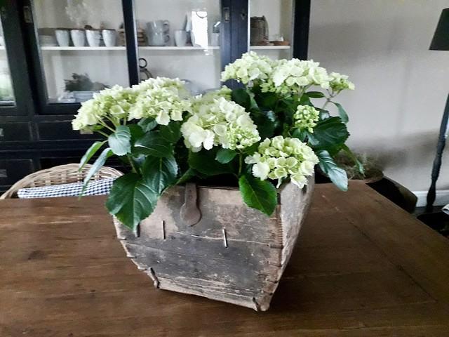Rijstbak met hortensia's op eettafel