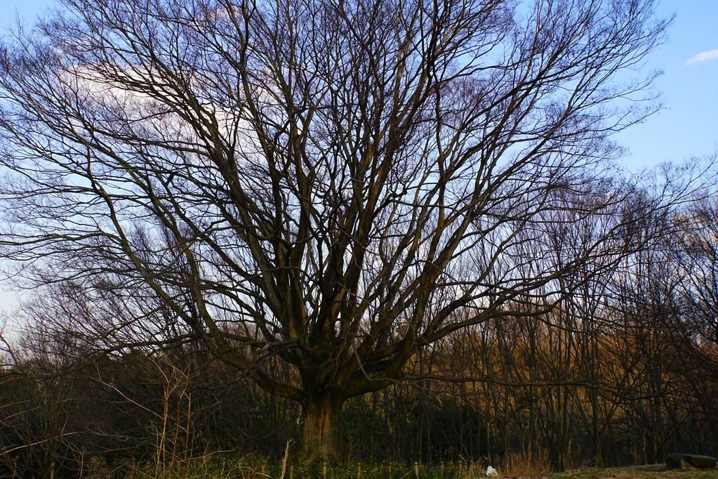 広角大きな木