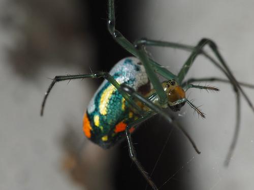 Orchard spider 1 | by zzffnn