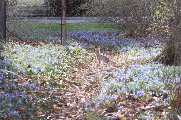 bunny rabbit rochester ny