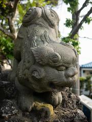 茅ヶ崎八雲神社の狛犬さん 阿