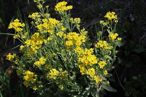 Brassées fleuries - Page 2 47603810622_c4ed93c4ab