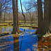 Flooded Forest by GerdaKettner