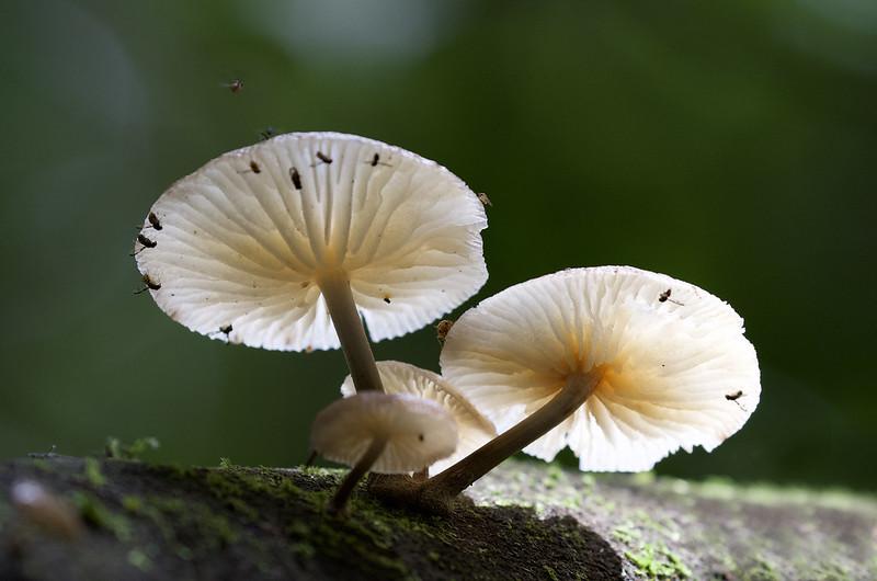 Fungi Ascanio_Best Costa Rica 199A0618
