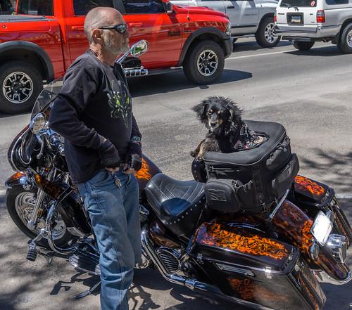 biker_dog_20190420_105