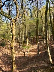 Beamish Woods