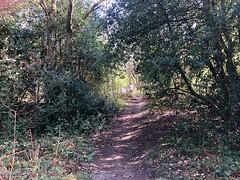 Beamish Woods